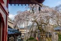 大光寺の桜 - デジカメ写真集