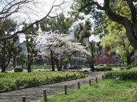春の芝公園 - AREKORE