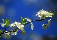 春の樹の列 - イーハトーブ・ガーデン