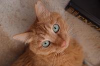 我が家の猫フード事情 - もるとゆらじお