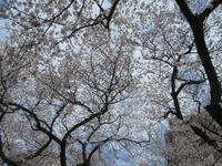 まだまだ、ところにより満開の旅 - 神奈川徒歩々旅