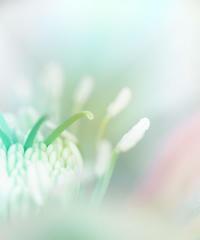 早春の花 クリスマスローズ 4 - 光 塗人 の デジタル フォト グラフィック アート (DIGITAL PHOTOGRAPHIC ARTWORKS)