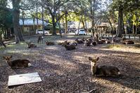 Deer in Nara Park - noBBy's *PhotoLabo*