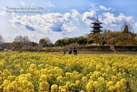 備中国分寺の春3/23 - 気ままな Digital PhotoⅡ