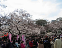 上野恩賜公園の桜が満開でした。 - 動物園のど!