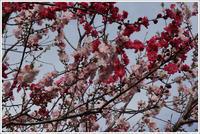 千住散歩-692 - Camellia-shige Gallery 2