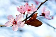 見逃せない、バンクーバーの春のお花イベント【地球の歩き方ブログにアップしました】 - バンクーバー日々是々