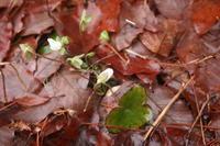 春分、うれしい!ことが - 宮迫の! ようこそヤマボウシの森へ