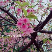 春を探してミニ冒険! - Natural-Rhythm~ナチュラリズム:アロマとハーブで穏やかな暮らし~