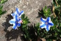 『カトレア原種展』とその他お知らせ - 手柄山温室植物園ブログ 『山の上から花だより』