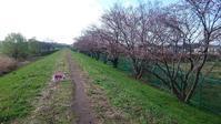 土手の桜はまだかいな。 - よしの日がな一日