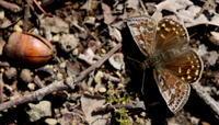 2018スプリングエフェメラルその1 - 紀州里山の蝶たち