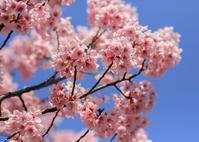 180325桜(4) - 一人の読者との対話