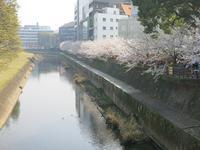 お花見@熊本城 - My favorite...