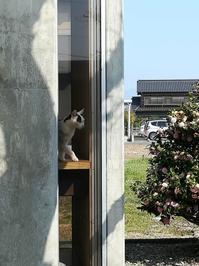 にゃんこ窓のニャンさま - 幸福な時間