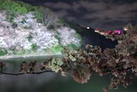 千鳥ヶ淵の桜 ライトアップ - ルンコたんとワタシの心模様