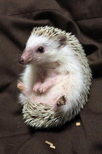 3月25日(日) 赤いちゃんちゃんこ - ほのぼの動物写真日記