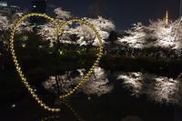 六本木の夜桜2018 - オートクチュールの旅日記
