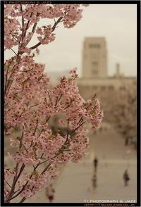 東工大の桜 Part 2 - TI Photograph & Jazz