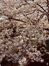 3月最終営業日と4月味噌作り会のおしらせです。 - miso汁香房(ロジの木)