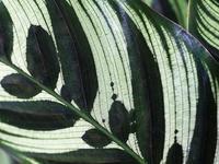 京都植物園熱帯植物温室編 - スポック艦長のPhoto Diary