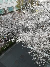 山手線の花見の穴場混雑しない場所 - 木村佳子のブログ ワンダフル ツモロー 「ワンツモ」