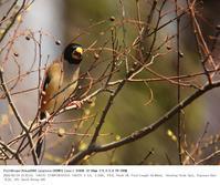 2018.3.24(2) - 鳥撮り遊び