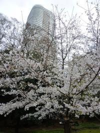 木島櫻谷の動物画@泉屋博古館分館 & 8分咲きくらいの桜@六本木一丁目 - カステラさん