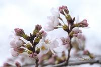 開花の便り - 季節のおくりもの