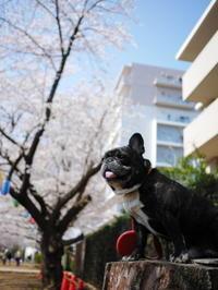 お散歩中のお花見 - ichibey日々の記録