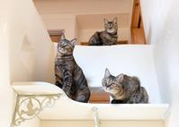 壁の光に注目 - 猫と夕焼け