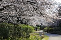2018年桜咲く季節 - はじめてみるもの