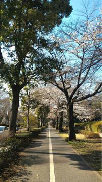 3月27日(火) スケジュール 18:30~20:00 - 札幌 ヨガ スタジオ です。アイアンガーヨガ教室 の blog
