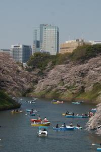 東京さくら巡り(千鳥ヶ淵周辺) - マルオのphoto散歩