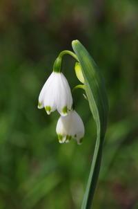 マイガーデンの春の花 - 季節の風を追いかけて