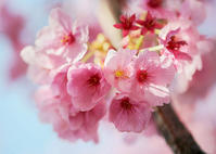 180325桜(6) - 一人の読者との対話