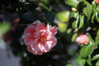 180325桜(7) - 一人の読者との対話
