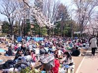 Inokashira park, hanami viewing. NOT cherry blossoms viewing. :-D - Hike in and around Tokyo