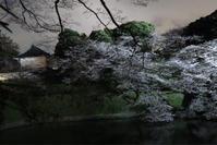 桜ライトアップ - ルンコたんとワタシの心模様
