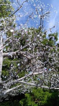 キラキラの桜 - ただびより~多田沙織と音楽と日常~