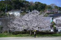 2018年の桜 - 絵で見るカメラ + plus