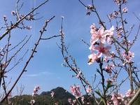 桃とミツバチ - 自然栽培 果樹カナン