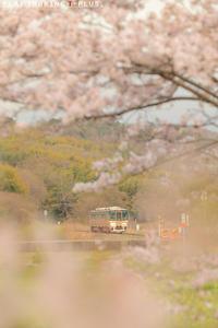 もうすぐ桜の季節 - PTT+.