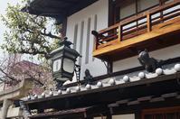京町家「風雷房」の猫@京都・四条烏丸 - たんぶーらんの戯言