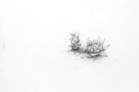 《弥生三月蕗の薹》 - 『ヤマセミの谿から・・・ある谷の記憶と追想』