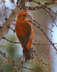 ついつい.....^^; - 北の大地で野鳥ときどきフライフィッシング