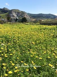 おうちの前はお花畑❤ - La Tavola Siciliana  ~美味しい&幸せなシチリアの食卓~