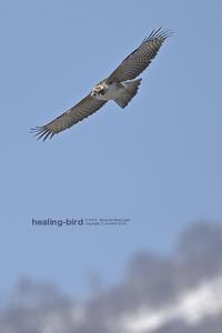 感無量、、、Mounten Hawk Eagle - healing-bird