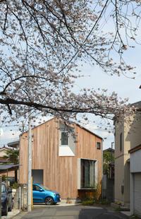 石神井U邸 竣工3年目の桜 - kukka kukka