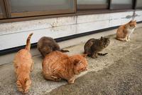 灯台猫たち2018.03.23 - ちわりくんのありふれた毎日II